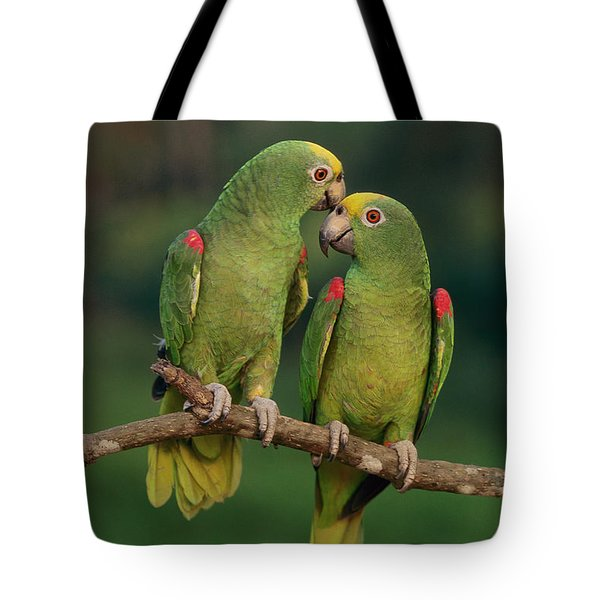 Yellow-crowned Parrot Amazona Tote Bag by Thomas Marent