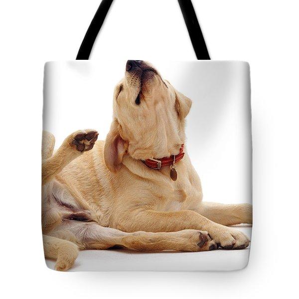Yellow Labrador Scratching Tote Bag by Jane Burton