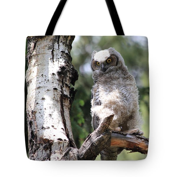 Young Owl Tote Bag by Shane Bechler