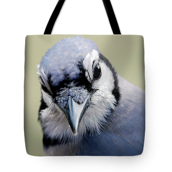 Blue Jay Tote Bag by Skip Willits
