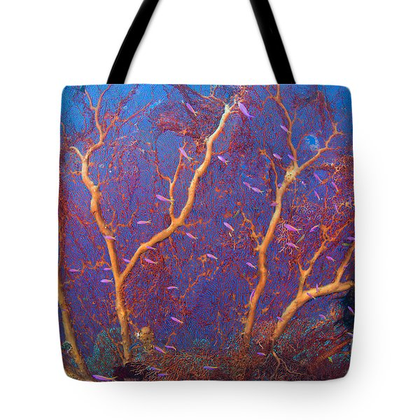 A Red Sea Fan With Purple Anthias Fish Tote Bag by Steve Jones