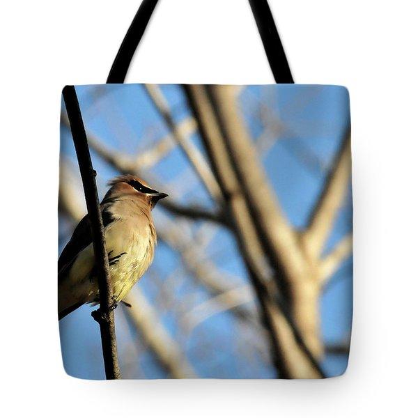 Cedar Wax Wing Tote Bag by David Arment