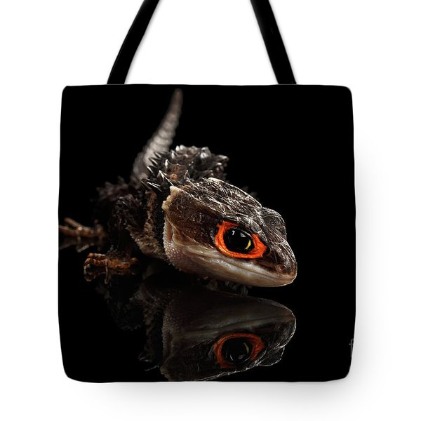 Closeup Red-eyed Crocodile Skink, Tribolonotus Gracilis, Isolated On Black Background Tote Bag by Sergey Taran