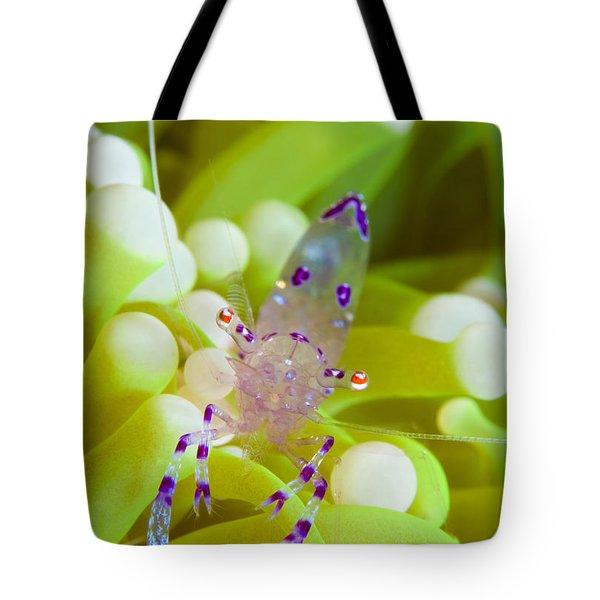 Commensal Shrimp On Green Anemone Tote Bag by Steve Jones