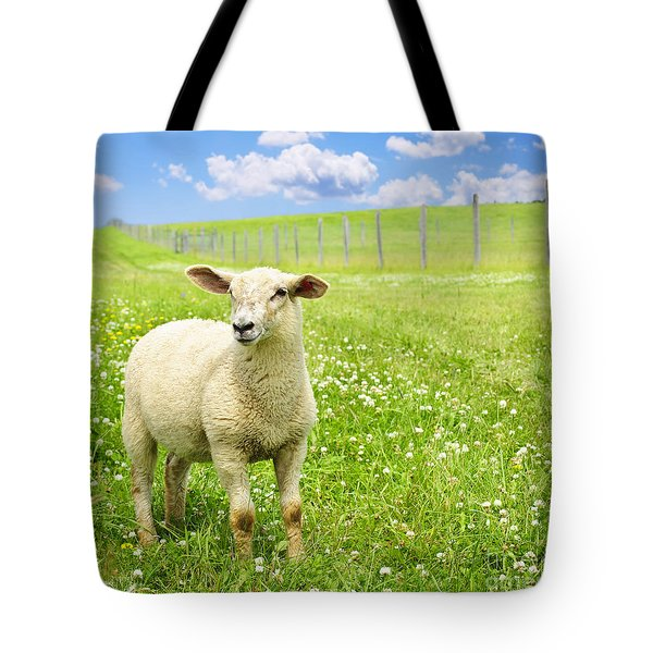 Cute Young Sheep Tote Bag by Elena Elisseeva