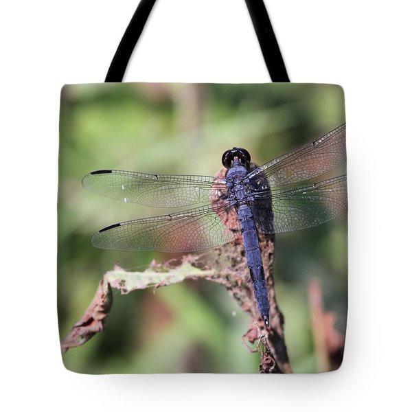 Hanging On Tote Bag by Karol Livote