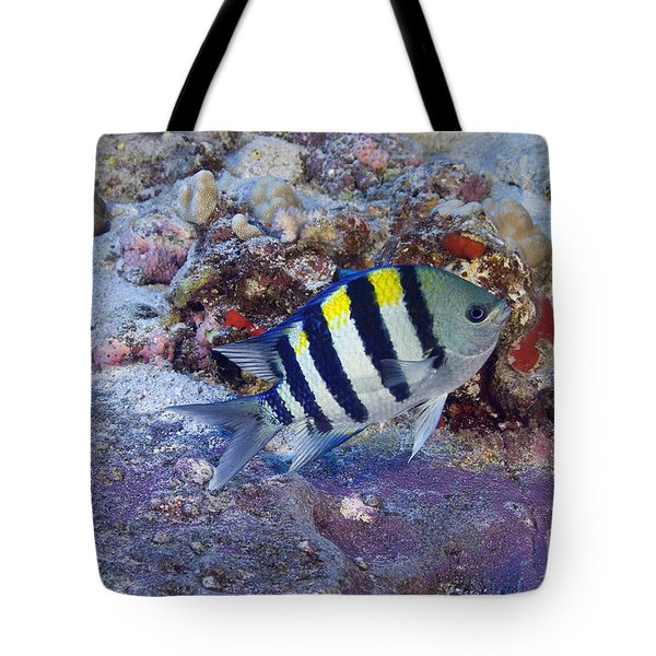 Hawaii, Marine Life Tote Bag by Dave Fleetham - Printscapes