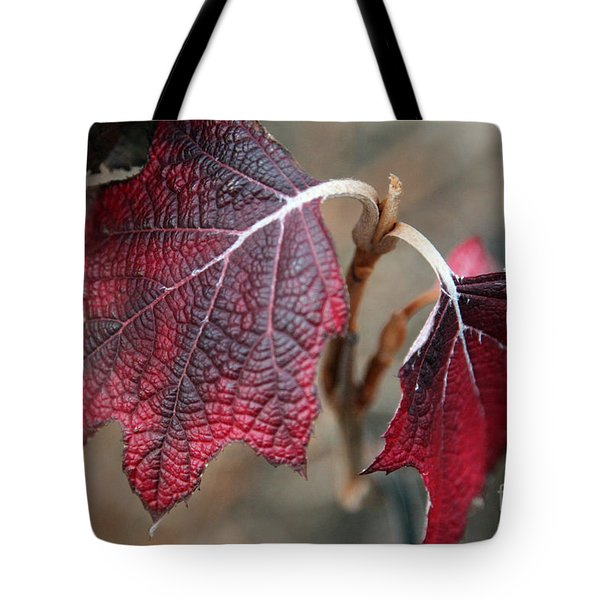 Leaves Tote Bag by Amanda Barcon