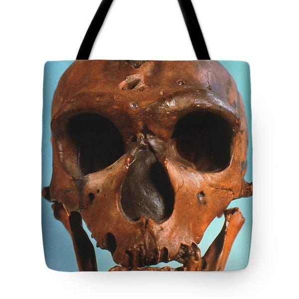 Neanderthal Skull Tote Bag by Granger