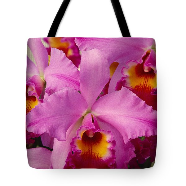 Pink Cattleya Orchids Tote Bag by Allan Seiden - Printscapes
