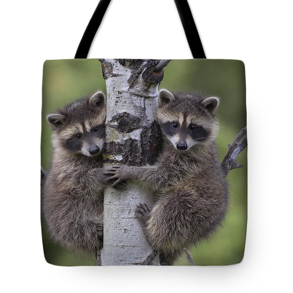 Raccoon Two Babies Climbing Tree North Tote Bag by Tim Fitzharris