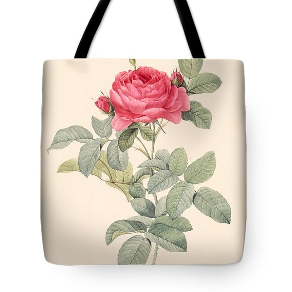 Rosa Gallica Pontiana Tote Bag by Pierre Joseph Redoute