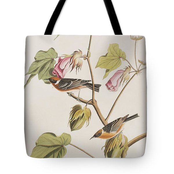 Bay Breasted Warbler Tote Bag by John James Audubon