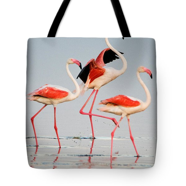 Greater Flamingos Phoenicopterus Roseus Tote Bag by Panoramic Images
