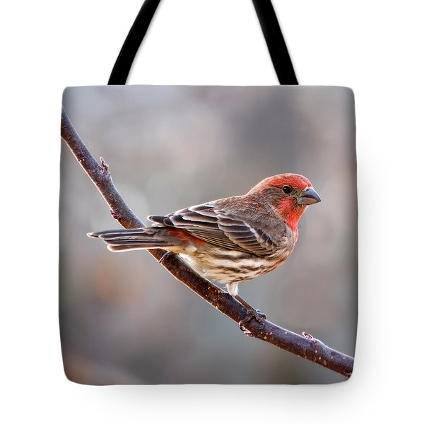 House Finch Tote Bag by Betty LaRue