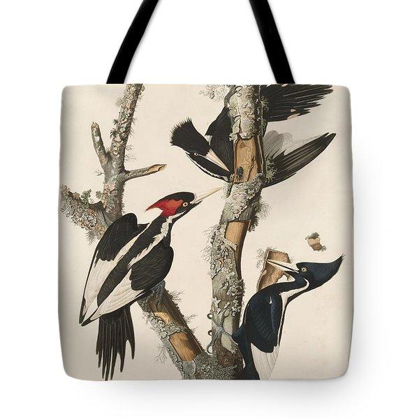 Ivory-billed Woodpecker Tote Bag by John James Audubon