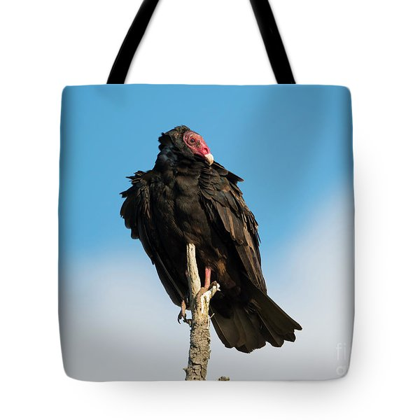 Looking For A Meal Tote Bag by Mike Dawson