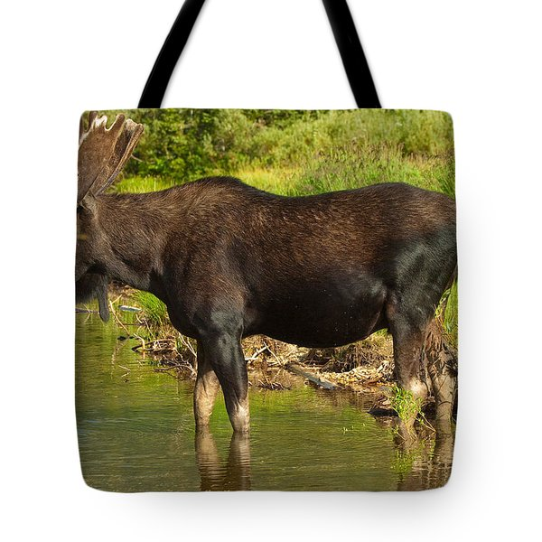 Moose Tote Bag by Sebastian Musial