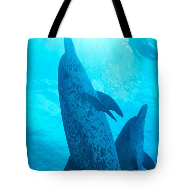 Pair Of Spotted Dolphins Tote Bag by Ed Robinson - Printscapes