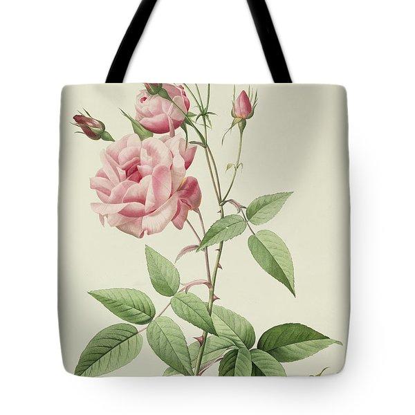 Rosa Indica Vulgaris Tote Bag by Pierre Joseph Redoute