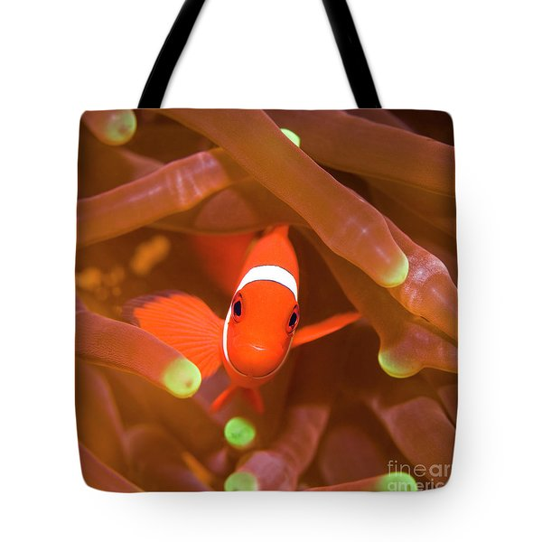 Tropical Fish Clownfish Tote Bag by MotHaiBaPhoto Prints