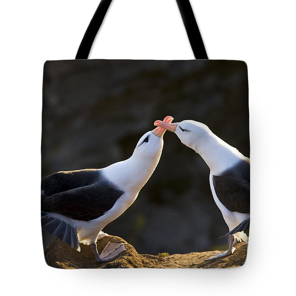 Black-browed Albatross Couple Tote Bag by Jean-Louis Klein & Marie-Luce Hubert
