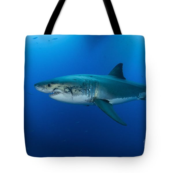 Male Great White Shark, Guadalupe Tote Bag by Todd Winner