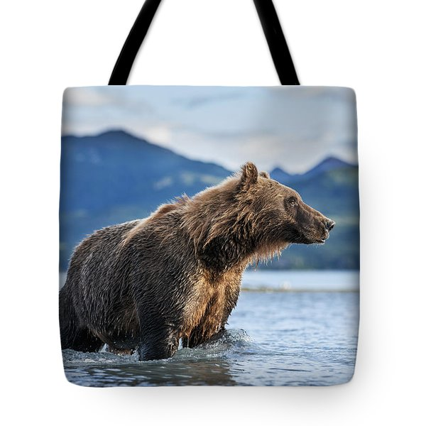 Coastal Brown Bear  Ursus Arctos Tote Bag by Paul Souders