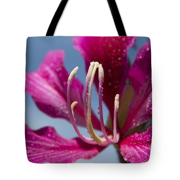 Bauhinia Purpurea - Hawaiian Orchid Tree Tote Bag by Sharon Mau