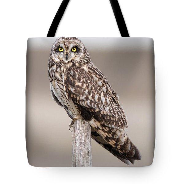 Short Eared Owl Tote Bag by Ian Hufton