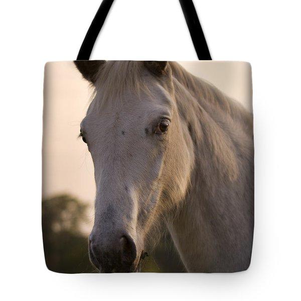 The Horse Portrait Tote Bag by Angel  Tarantella