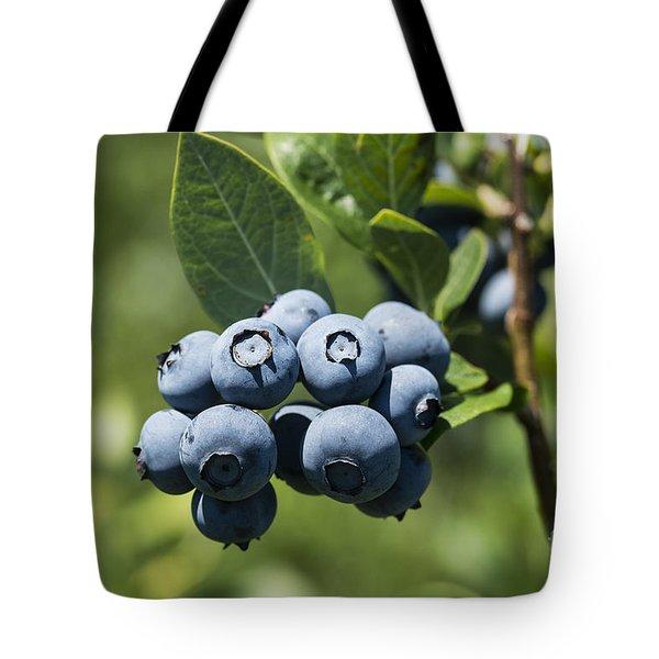 Blueberry Bush Tote Bag by John Greim