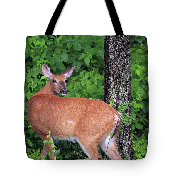 A Doe Within The Trees Tote Bag by Karol Livote