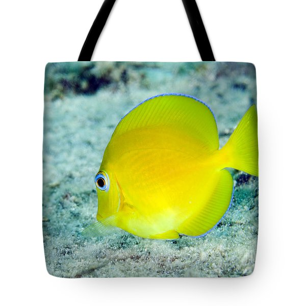A Juvenile Blue Tang Searching Tote Bag by Terry Moore