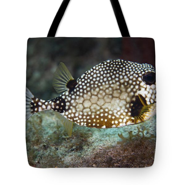 A Spotted Trunkfish, Key Largo, Florida Tote Bag by Terry Moore