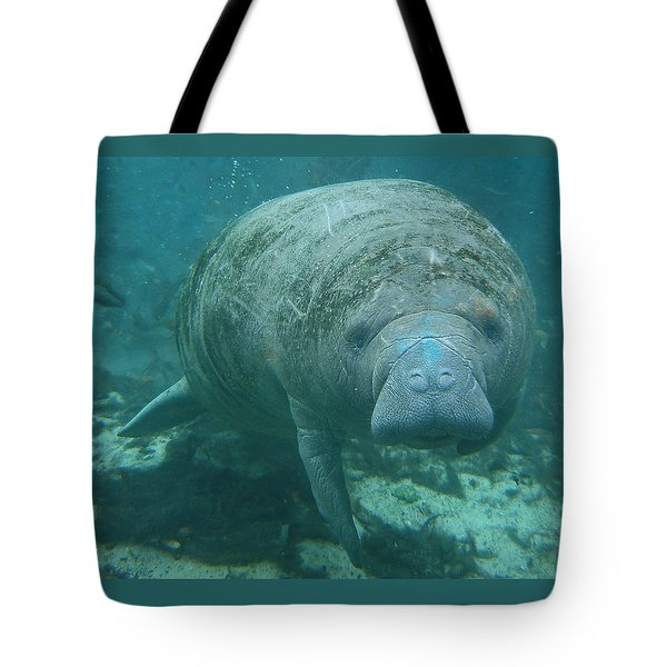 About To Meet A Manatee Tote Bag by Kimberly Mohlenhoff