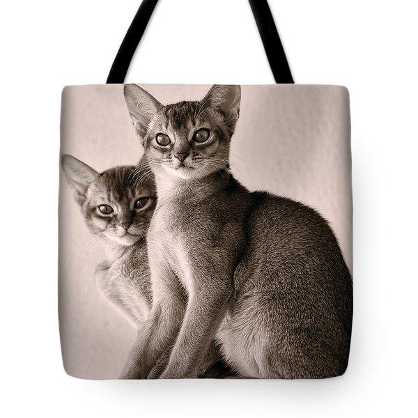Abyssinian Kittens Tote Bag by Ari Salmela