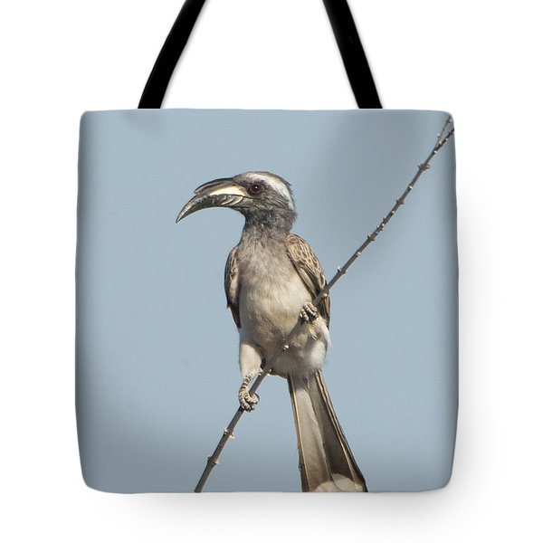 African Grey Hornbill Tockus Nasutus Tote Bag by Panoramic Images