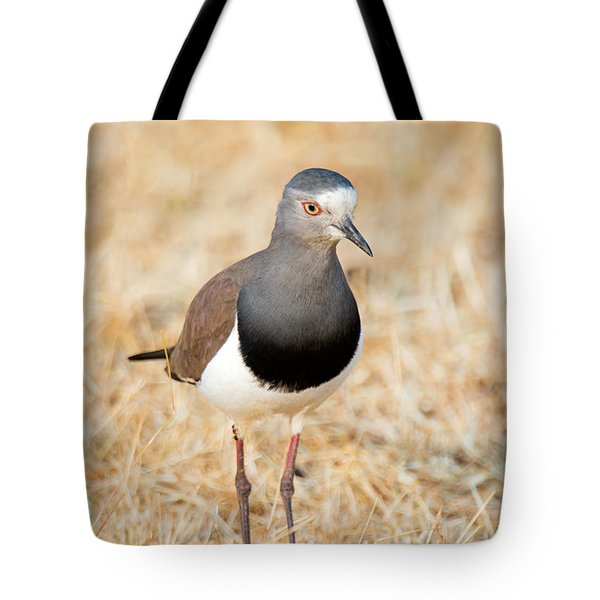 African Wattled Lapwing Vanellus Tote Bag by Panoramic Images