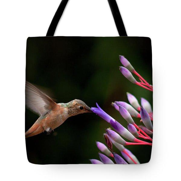 Allen's Hummingbird At Breakfast Tote Bag by Mike Herdering
