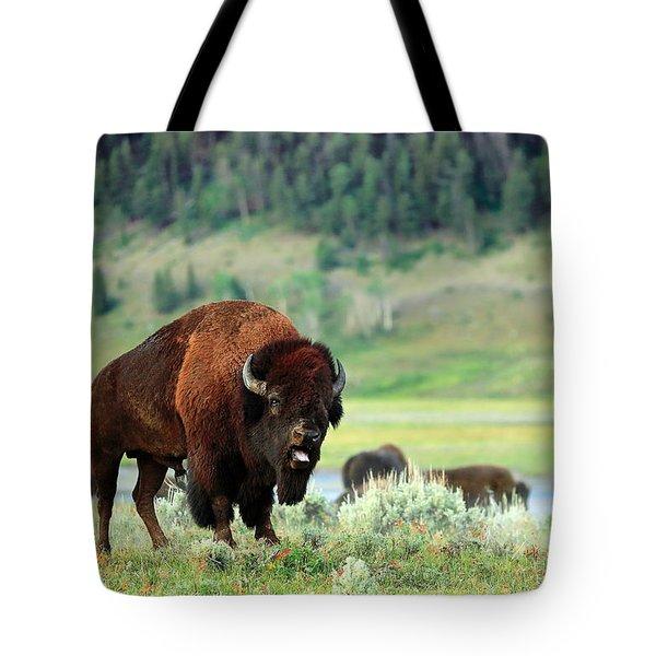 Angry Buffalo Tote Bag by Todd Klassy