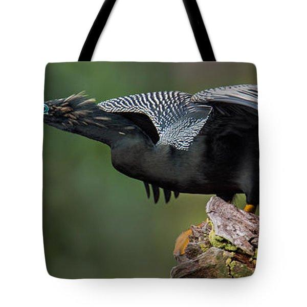 Anhinga Anhinga Anhinga, Costa Rica Tote Bag by Panoramic Images