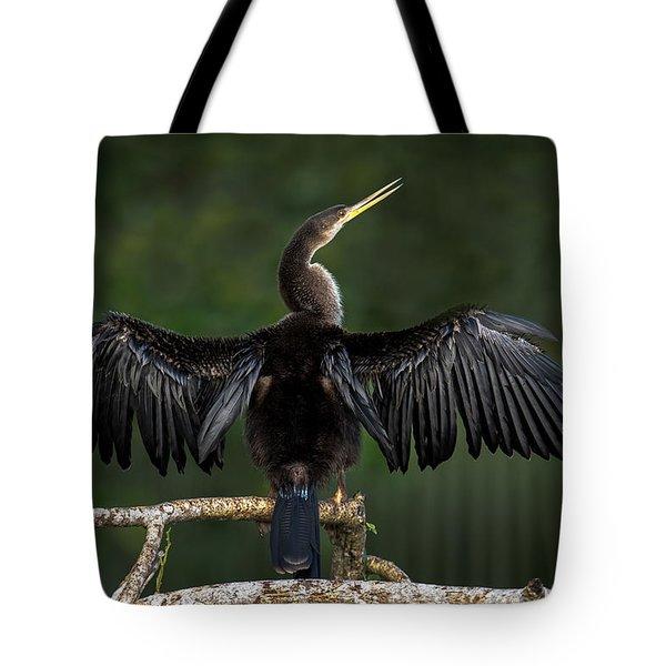 Anhinga Anhinga Anhinga Perching Tote Bag by Panoramic Images