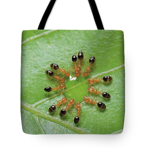 Ant Monomorium Intrudens Group Drinking Tote Bag by Takashi Shinkai