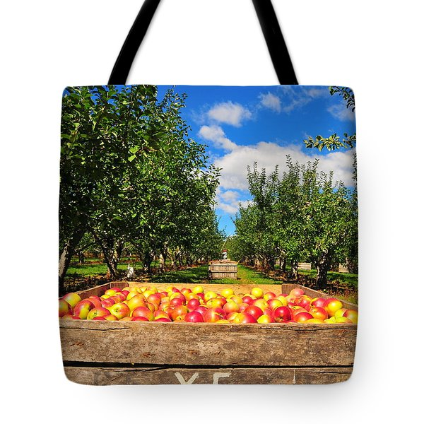 Apple Picking Season Tote Bag by Catherine Reusch  Daley