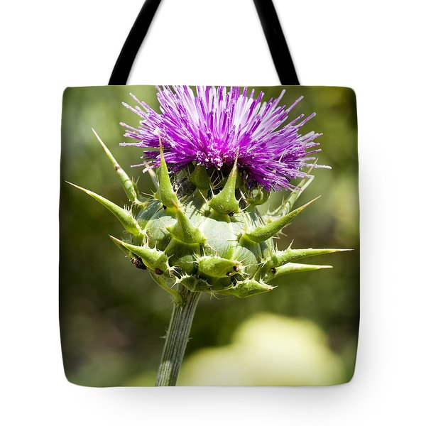 Artichoke Thistle 3 Tote Bag by Kelley King