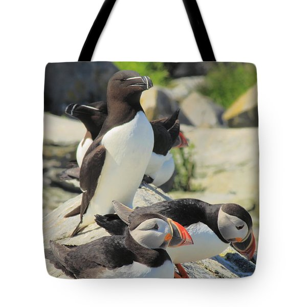Atlantic Puffins And Razorbill Tote Bag by John Burk