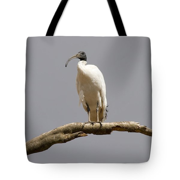 Australian White Ibis Perched Tote Bag by Mike  Dawson