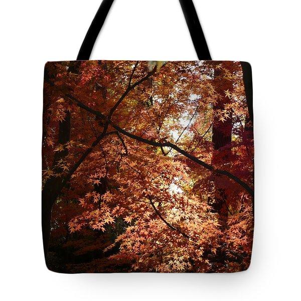 Autumn Sunshine Poster Tote Bag by Carol Groenen