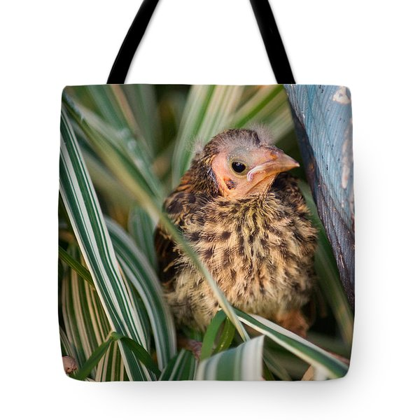 Baby Bird Hiding in Grass Tote Bag by Douglas Barnett